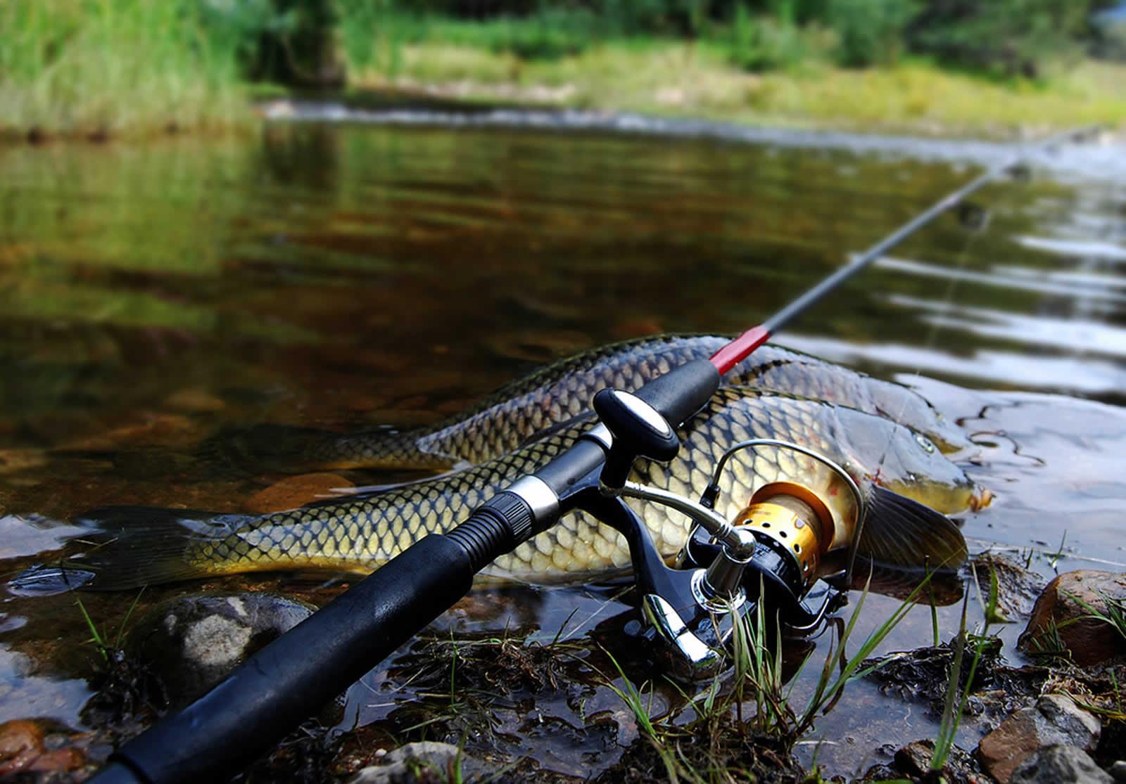 рыбалка на удочку бесплатно